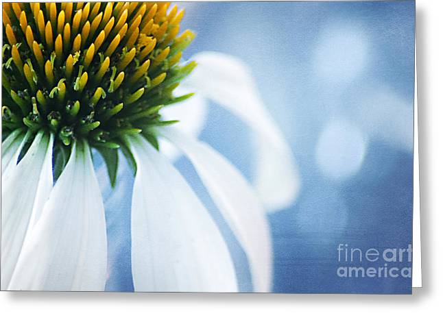 She's a little Blue Greeting Card by Darren Fisher