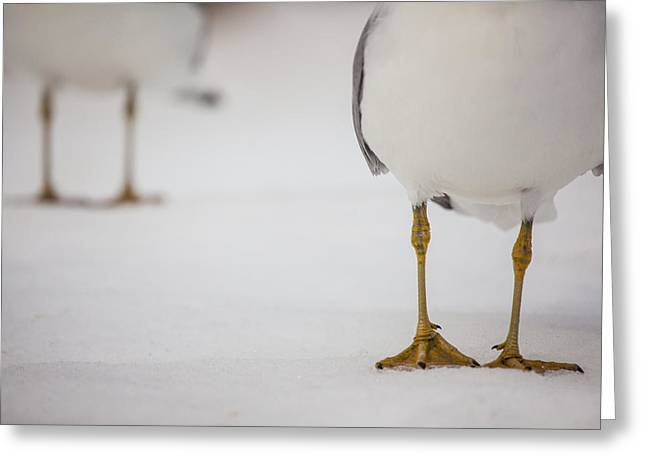 Get Greeting Cards - Shes Got Legs Greeting Card by Karol  Livote