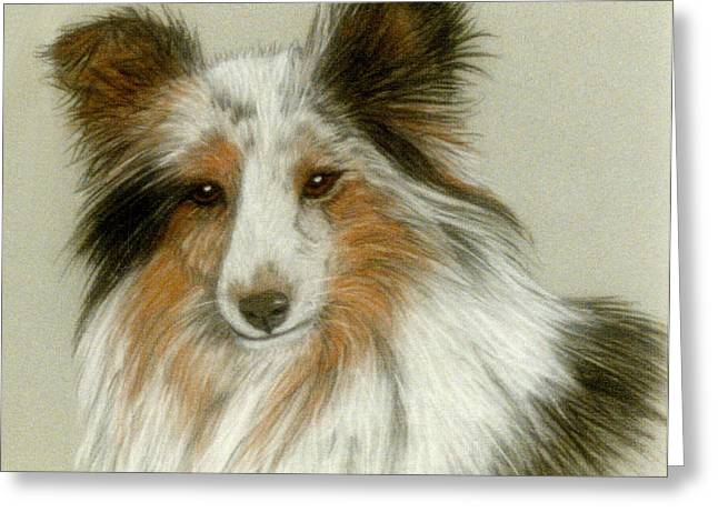 Collie Pastels Greeting Cards - Shetland Collie Greeting Card by Jan Amiss