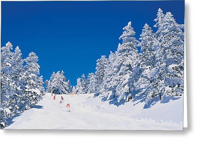 Cross Country Greeting Cards - Shiga Kogen Nagano Japan Greeting Card by Panoramic Images