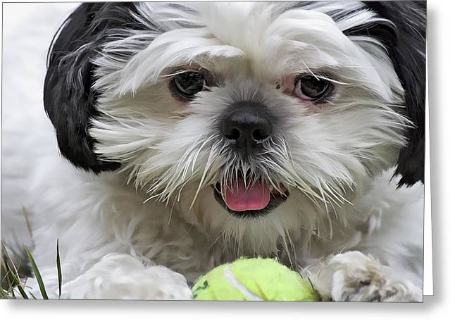 Shih Tsu And Ball Greeting Card by Stephen Bonk
