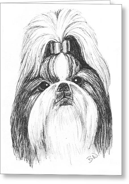 House Pet Drawings Greeting Cards - Shih Tzu Greeting Card by Brenda Nelson