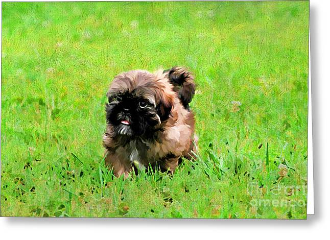Full-length Portrait Greeting Cards - Shih Tzu Puppy Greeting Card by Darren Fisher