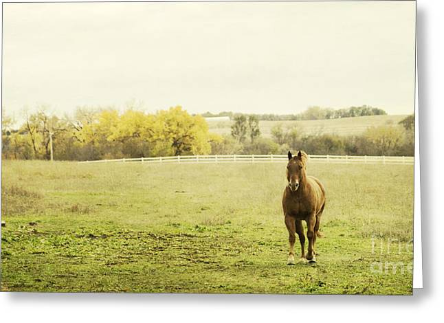 Barn Yard Greeting Cards - Shiloah on the Run Greeting Card by Pam  Holdsworth