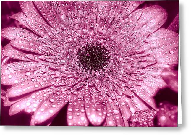 Shimmer Greeting Card by Sue Small