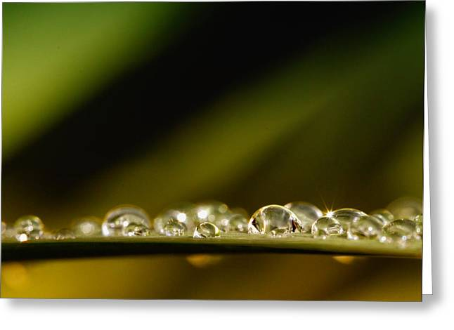 Eps10 Greeting Cards - Shine like Diamonds Greeting Card by Kent Mathiesen