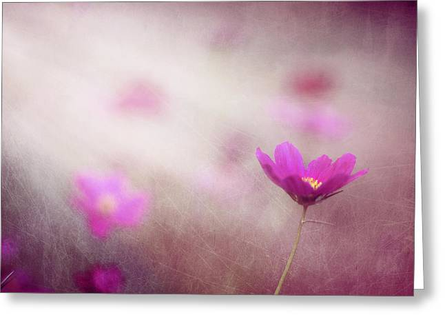 Flower Photos Greeting Cards - Shine On Me Greeting Card by Amy Tyler