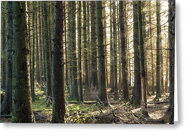 Walk Greeting Cards - Shine Through The Forest. Greeting Card by Daniel Kay