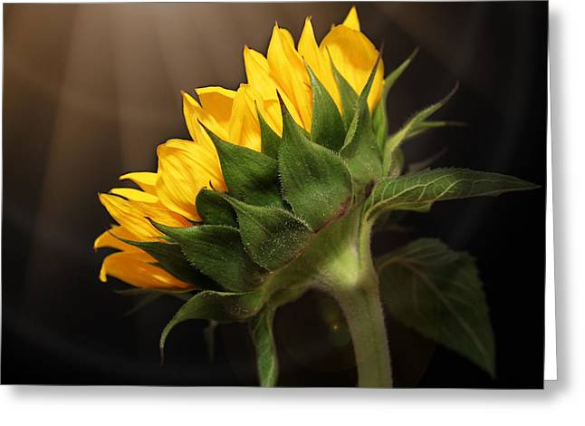 Interior Still Life Greeting Cards - Shine Your Light On Me Greeting Card by Judy Vincent