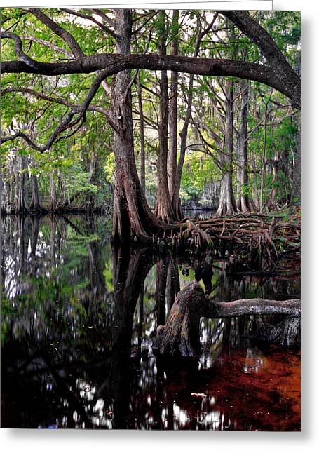 Chris Kusik Greeting Cards - Shingle Creek II. Greeting Card by Chris  Kusik