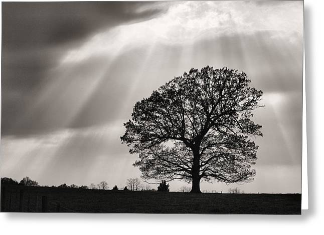 Stafford Greeting Cards - Shining Down Greeting Card by JC Findley