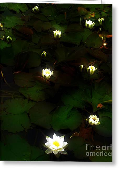 Lily Lamps Greeting Card by Nina Ficur Feenan