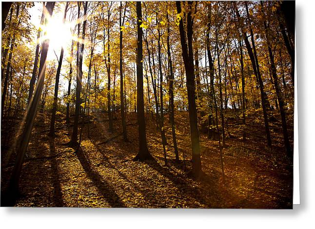 Fallen Leaf Greeting Cards - Shining Sun in The Woods Greeting Card by Kamil Swiatek