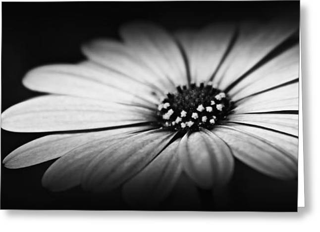 Slimline Greeting Cards - Shining Through Greeting Card by Clare Bevan