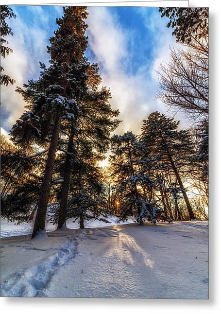 Fir Trees Greeting Cards - Shining Through Greeting Card by Mark Papke