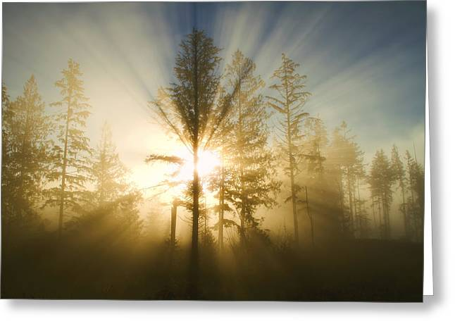 Sun Breakthrough Greeting Cards - Shining Through Greeting Card by Peggy Collins