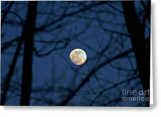 Man In The Moon Greeting Cards - Shining Through Greeting Card by Steve Ratliff