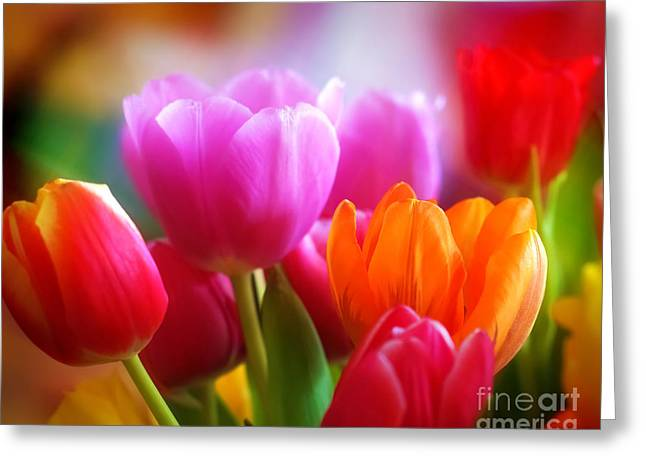 Featured Art Greeting Cards - Shining Tulips Greeting Card by Lutz Baar