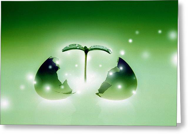 Artistic Creation Greeting Cards - Shiny Green Egg Bursting In Two Greeting Card by Panoramic Images