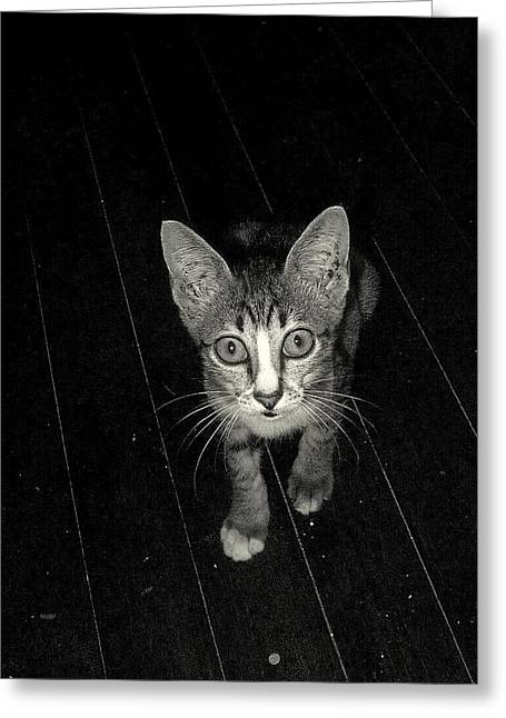 Bobcats Greeting Cards - Shocked Greeting Card by Arylana Art