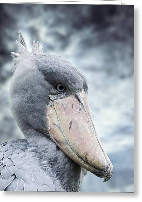 Rex Greeting Cards - Shoebill Greeting Card by Wim Lanclus