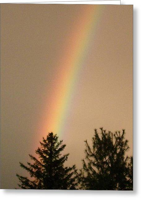 Storm Lovers Art Greeting Cards - SHOOTING RAINBOW silhouettes trees Greeting Card by Gail Matthews