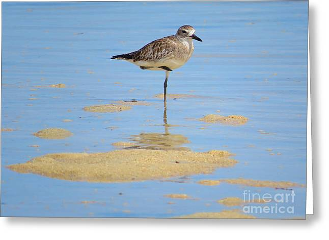 Sea Birds Greeting Cards - Shore Bird in Palawan Greeting Card by Debbie Parker