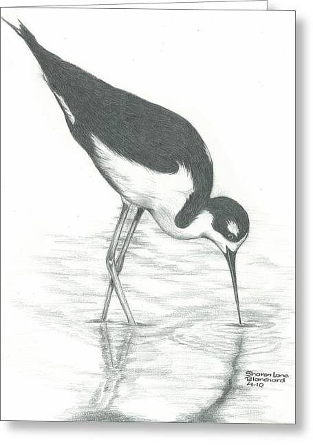 Swamp Drawings Greeting Cards - Shore Bird Greeting Card by Sharon Blanchard