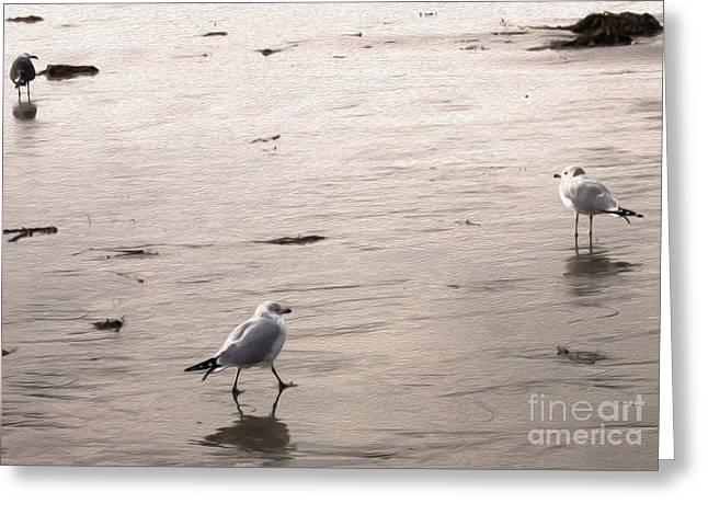 Shore Birds - 01 Greeting Card by Gregory Dyer