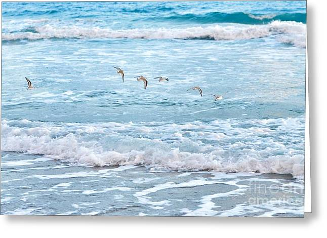Seabirds Mixed Media Greeting Cards - Shore Birds in Flight Greeting Card by Brandi Fitzgerald