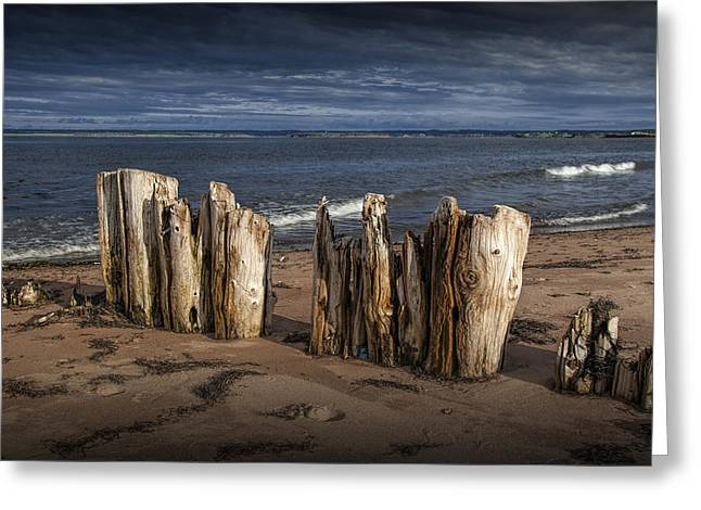 Canada Photograph Greeting Cards - Shore Pilings on Prince Edward Island Greeting Card by Randall Nyhof