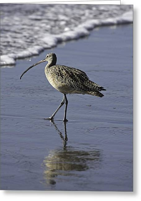 Shorebirds Greeting Cards - Shorebird and Surf Greeting Card by TB Sojka
