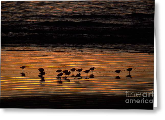 California Beach Greeting Cards - Shorebirds At Sunset Greeting Card by Ron Sanford