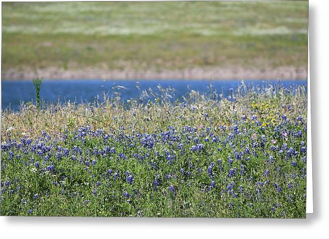 La Grange Greeting Cards - Shoreline Bluebonnets Greeting Card by Rod Andress