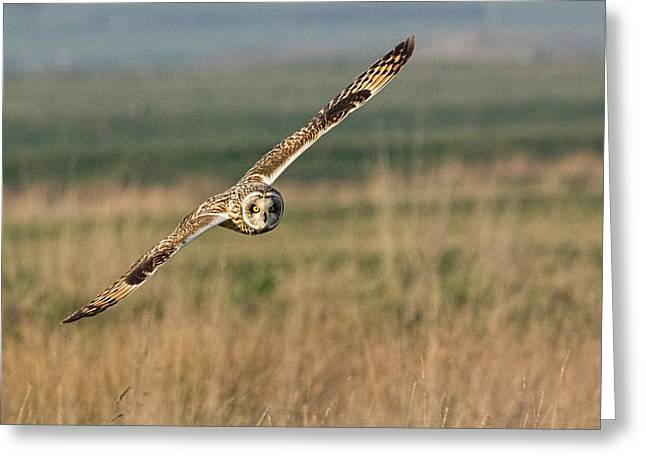 Short Eared Owl Greeting Card by Ian Hufton