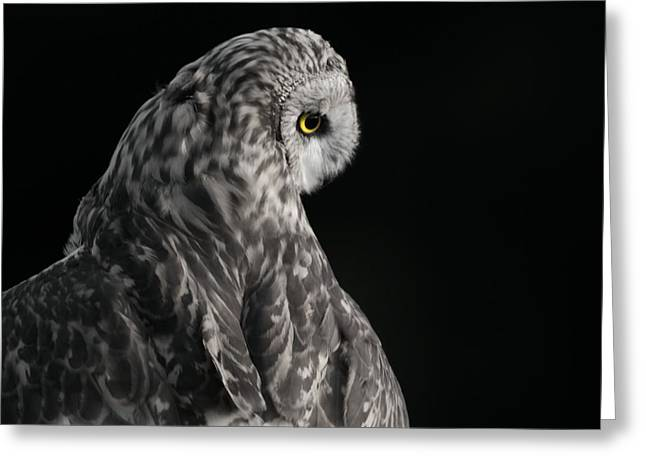 Owl Photographs Greeting Cards - Short Eared Owl In Flight Greeting Card by Dan Sproul