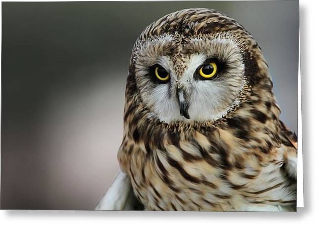 Owl Photographs Greeting Cards - Short Eared Owl Portrait Greeting Card by Dan Sproul