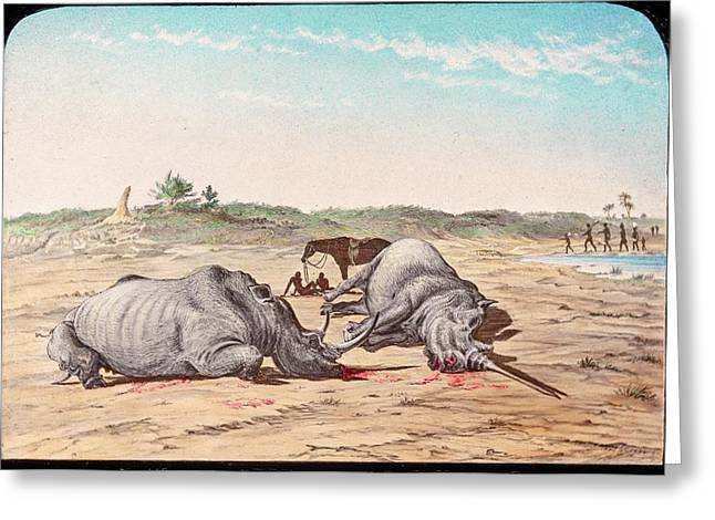 Shot White Rhinoceroses Greeting Card by Gustoimages/science Photo Libbrary