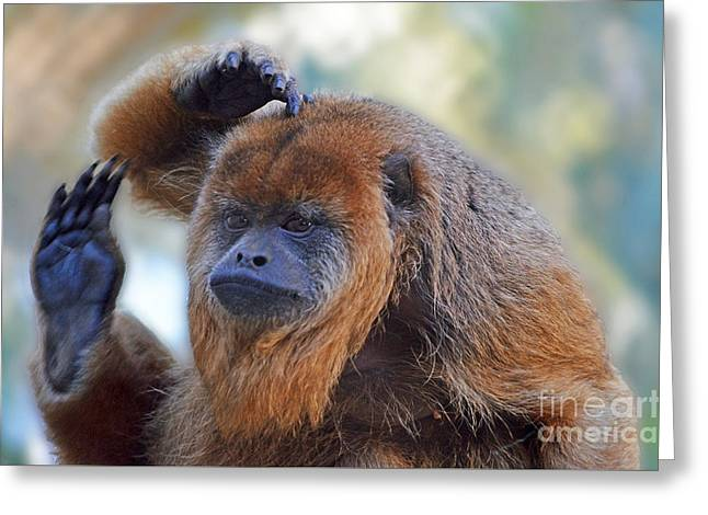 Year Of The Monkey Greeting Cards - Should I Wave or Salute  A Brown Howler Monkey Greeting Card by Jim Fitzpatrick