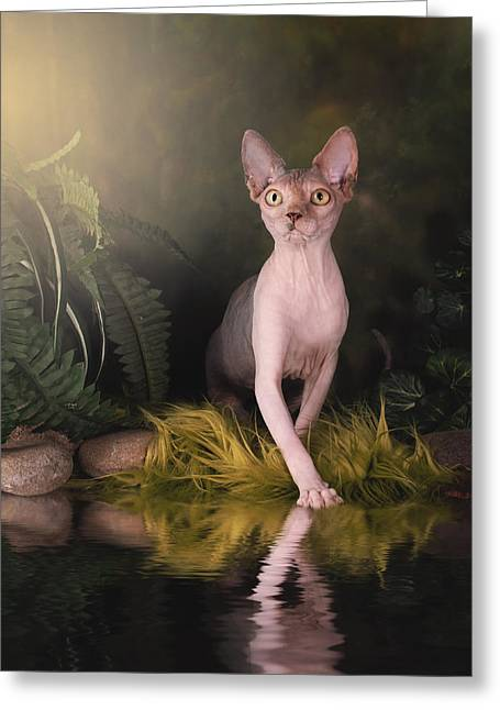 Sphynx Cat Greeting Cards - Should We Swim Greeting Card by Brittney Gobble