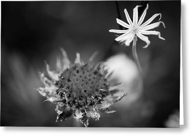 Asters Greeting Cards - Shoulda seen me last Week Glacier National Park BW Greeting Card by Rich Franco
