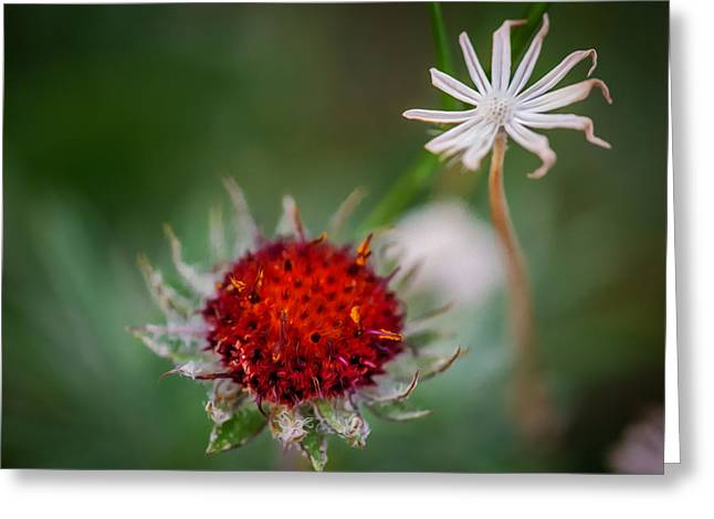 Asters Greeting Cards - Shoulda seen me last Week Glacier National Park Painted Greeting Card by Rich Franco