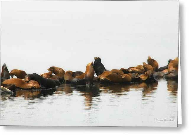 Harbor Seals Greeting Cards - Show A Little Love Greeting Card by Donna Blackhall
