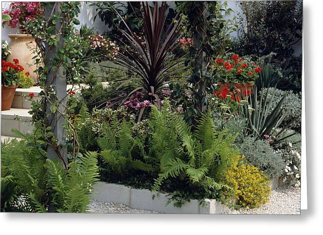 Chelsea Greeting Cards - Show garden with steps and gravel Greeting Card by Science Photo Library