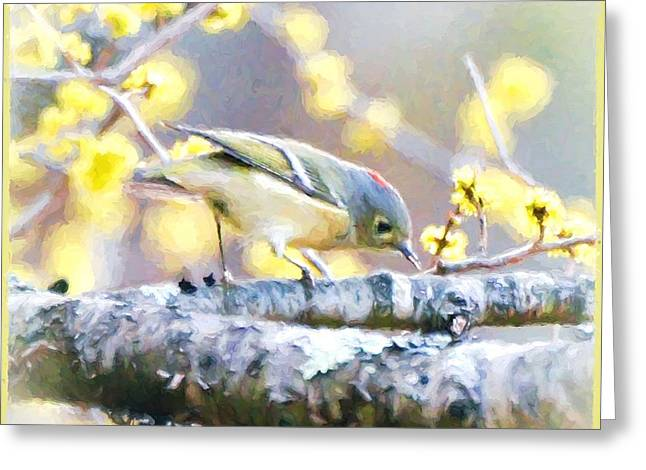 Ruby-crowned Kinglet Birds Greeting Cards - Showing His Ruby Crown Greeting Card by Kerri Farley