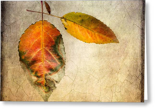 Autumn Photographs Digital Art Greeting Cards - Showtime Greeting Card by Betty LaRue