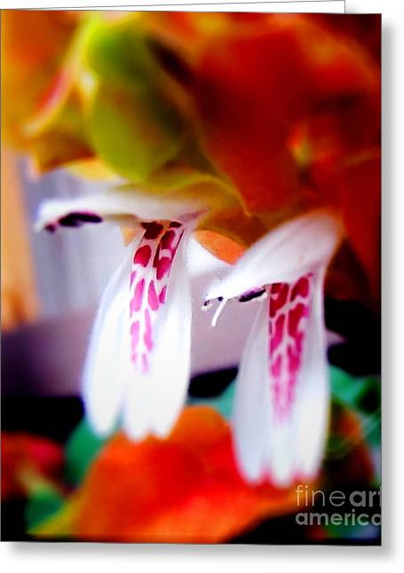 In Focus Greeting Cards - Shrimp Tails Greeting Card by John Kain