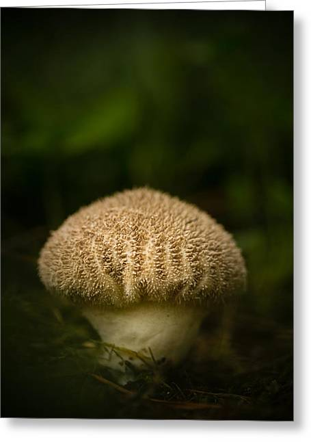 Fungus Greeting Cards - Shroomy Greeting Card by Shane Holsclaw