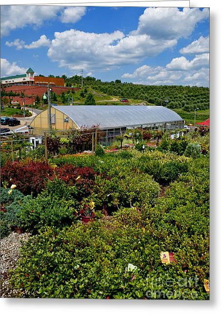 Allegheny Greeting Cards - Shrubbery at a Greenhouse Greeting Card by Amy Cicconi