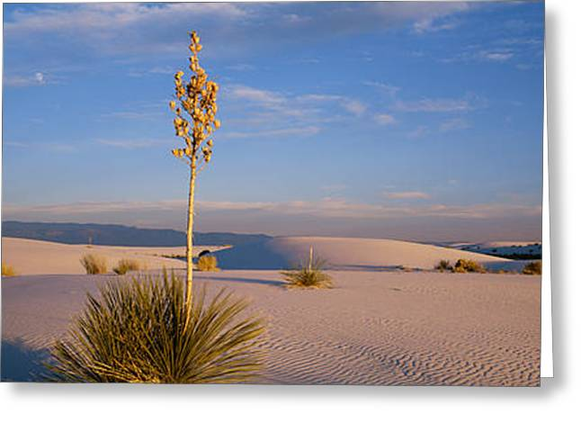 White Sands National Monument Greeting Cards - Shrubs In The Desert, White Sands Greeting Card by Panoramic Images
